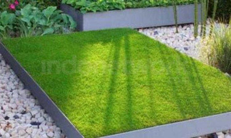 contoh rumput